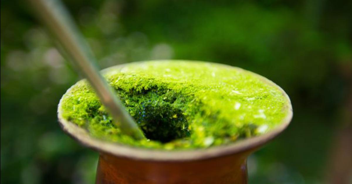 Além do chimarrão, erva-mate pode servir até para combater malária